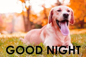 Cute Good Night Images Photo Download for Whatsaap
