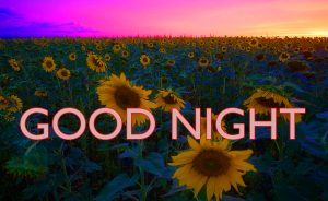 Gud ni8 Images Photo Pictures Free Download With Flower