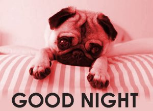 Cute Good Night Images Photo Pics Download