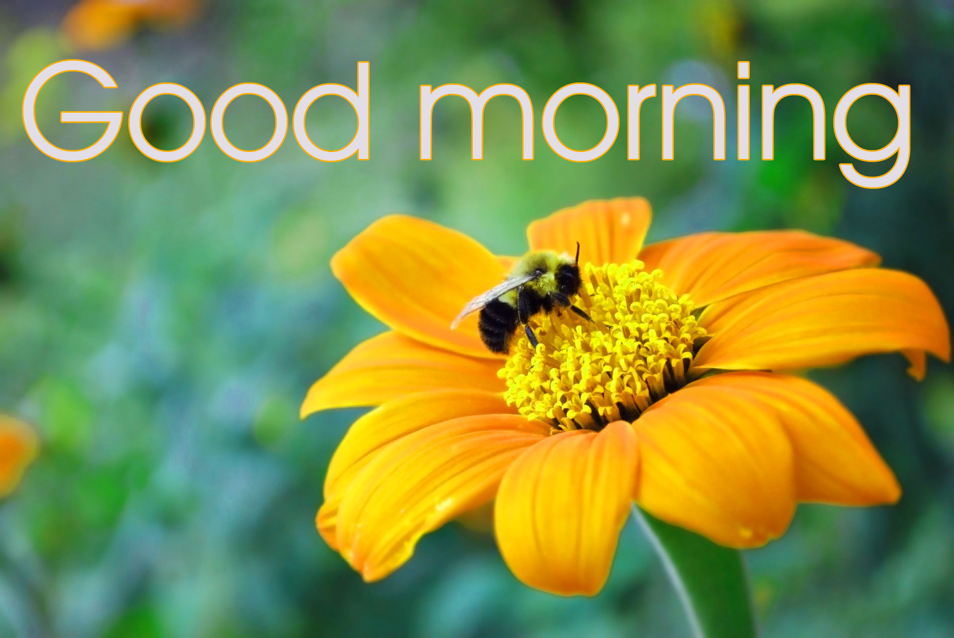478+ Good Morning Beautiful Flower Nature Girls Images HD Download
