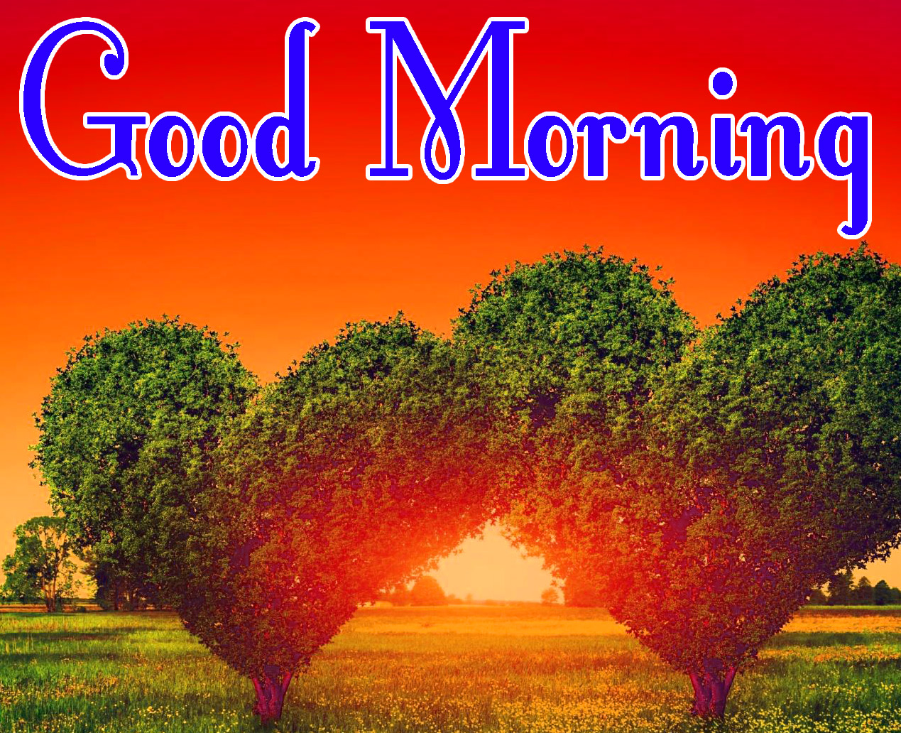216 Nature Good Morning Images Pics Download 2020 Good Morning Images Good Morning Photo Hd Downlaod Good Morning Pics Wallpaper Hd