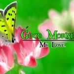 Good Morning Image with Nature 12