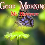 Good Morning Image with Nature 16