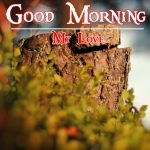 Good Morning Image with Nature 18