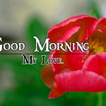 Good Morning Image with Nature 20