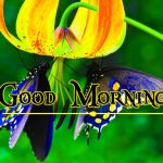 Good Morning Image with Nature 70