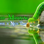 Good Morning Image with Nature 91