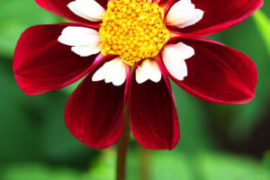 Beautiful Red Flower Good Morning Pics
