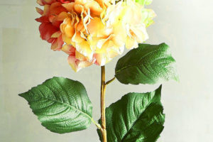 Flower Good Morning Images for Girlfriend