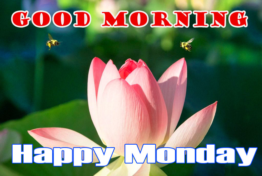 Monday Good Morning Pics Download