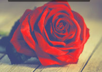 Red Rose Good Morning Images Download