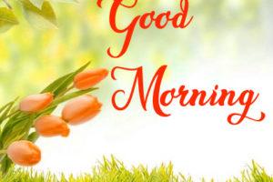 Beautiful Nature Good Morning 27