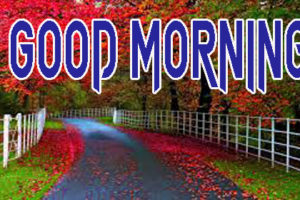 Latest Good Morning Images Download 19