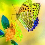 Beautiful Whatsapp DP Images 12