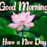 Flower Good morning Pics Download