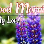 Free Flower Good morning Wallpaper Download
