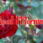 Best Top free Flower Good morning Pics Images Download