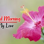 Free Flower Good morning Pics Download