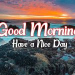 Sunrise Free Flower Good morning Pics Images Download