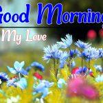 Flower Good morning Pics Download free