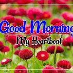 Free HD Flower Good morning Pics Download