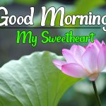 Latest Free Flower Good morning Pics Images Download