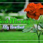 Flower Good morning Wallpaper Free
