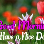 Latest Free Flower Good morning Pics Download