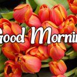 Flower Good morning Images 89