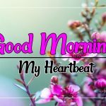 Beautiful Flower Good morning Pics Images Download