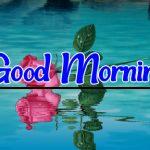 Flower Good morning Pics Free