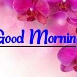 Flower Good morning Wallpaper New Download