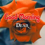 Free Morning Wishes Images With Red Rose pics Download