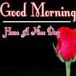 Morning Wishes Images With Red Rose Pics Download for GF
