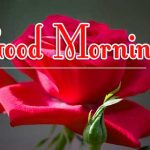Morning Wishes Images With Red Rose Wallpaper Pics Download