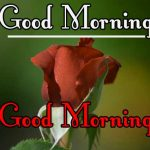 Best New Morning Wishes Images With Red Rose pics Download