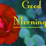 Red Rose Good Morning Images 20
