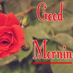 Red Rose Good Morning Images 22