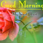 Morning Wishes Images With Red Rose Wallpaper for Whatsapp
