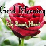 Free Best Morning Wishes Images With Red Rose Pics Download