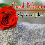 Morning Wishes Images With Red Rose Photo Free