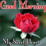 Best Free New Morning Wishes Images With Red Rose Pics Download