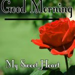 Red Rose Good Morning Images 3