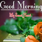 Morning Wishes Images With Red Rose Wallpaper for Facebook
