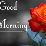 Red Rose Good Morning Images 40