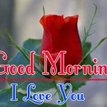 Morning Wishes Images With Red Rose Wallpaper HD Download