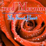 Free BestMorning Wishes Images With Red Rose Wallpaper Download