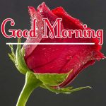 Best Quality Free Morning Wishes Images With Red Rose Pics Download
