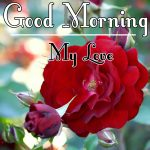 Red Rose Good Morning Images 61