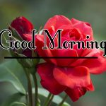 Morning Wishes Images With Red Rose Wallpaper Free Download